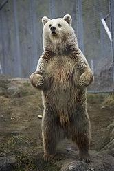 Imatge relacionada amb ós