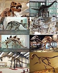 Imatge relacionada amb dinosaure