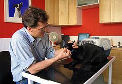 Imatge relacionada amb veterinari