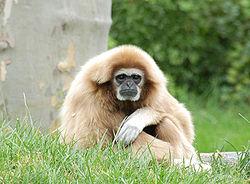 Imatge relacionada amb simi